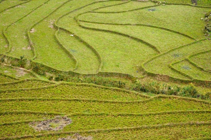 riz Vietnam de zone images stock