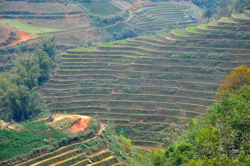 riz Vietnam de zone image stock