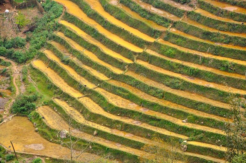 riz Vietnam de zone image libre de droits