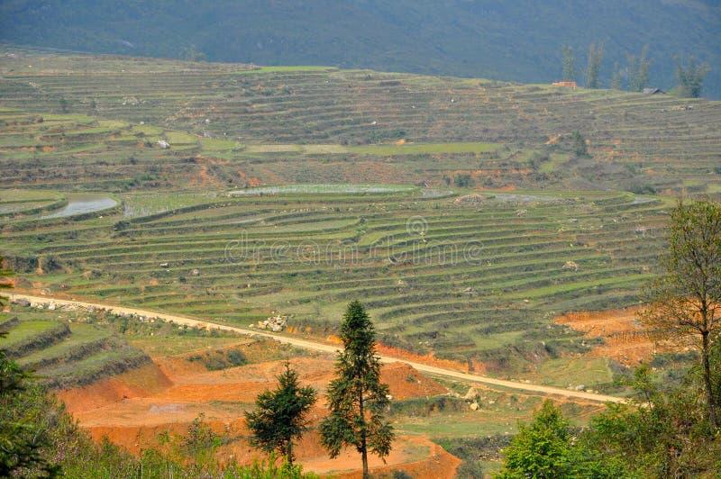 riz Vietnam de zone photographie stock
