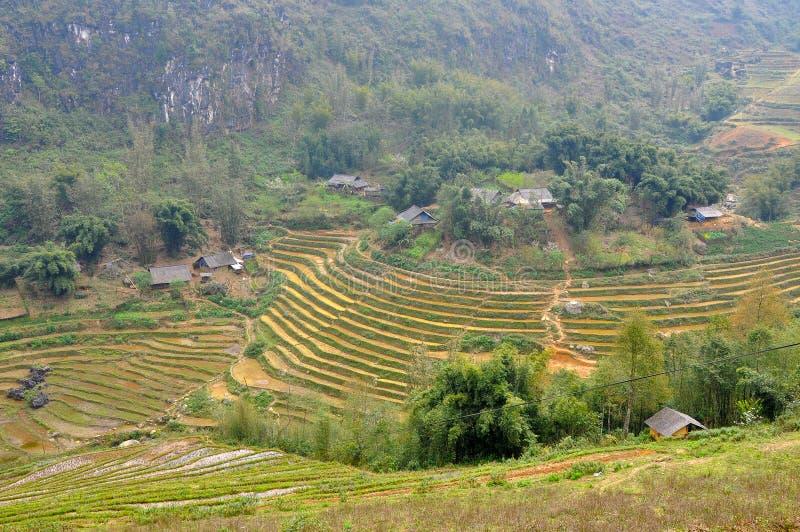 riz Vietnam de zone photos libres de droits