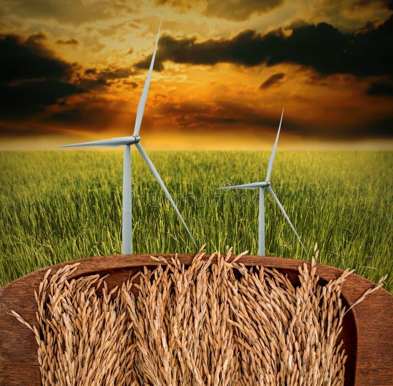 Rizière dans le plateau en bois avec la turbine de vent dans le domaine de riz photo libre de droits
