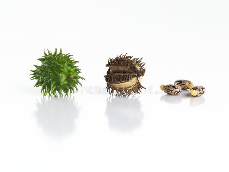 Rizinuspflanzen eingestellt lizenzfreies stockbild