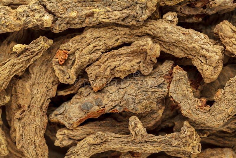 Rizomas orgânicos da cúrcuma da mãe ou Haldi & x28 secos; Longa& x29 da curcuma; raizes fotografia de stock royalty free