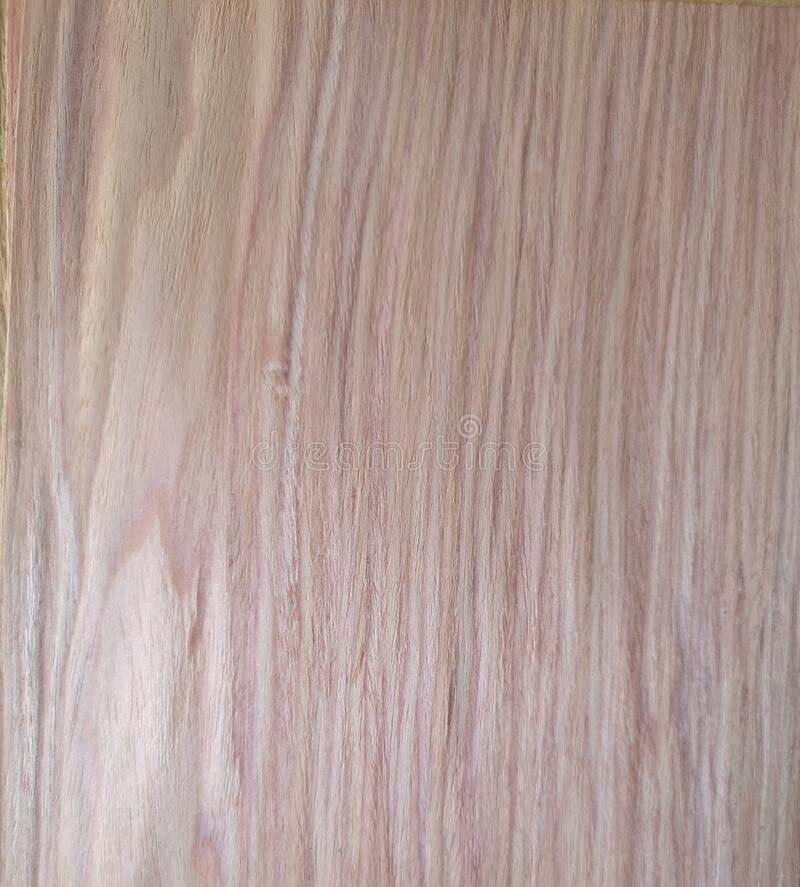 Rlmo Elm wood, Veneer Pattern brown wooden material finish surface furniture burr texture wall background. Surrounding royalty free stock image