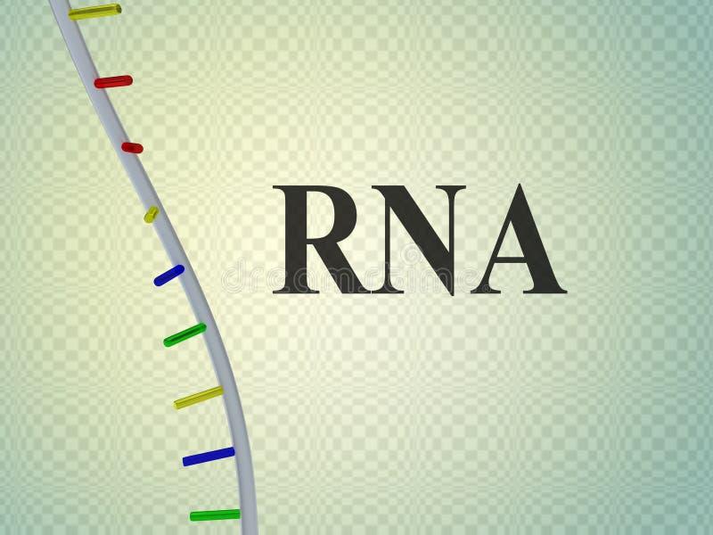 RNA - genetisch concept royalty-vrije illustratie