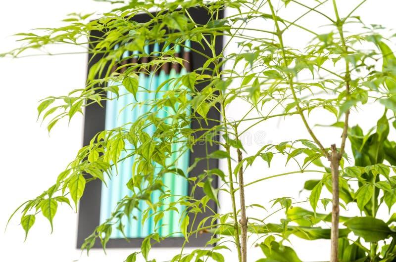 Rośliny i zieleń ołówki obraz royalty free