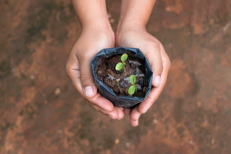 Rośliien drzewa obraz royalty free