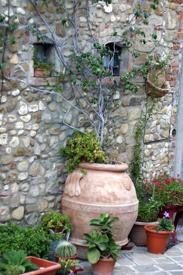 roślina dekoracyjni garnki zdjęcia royalty free