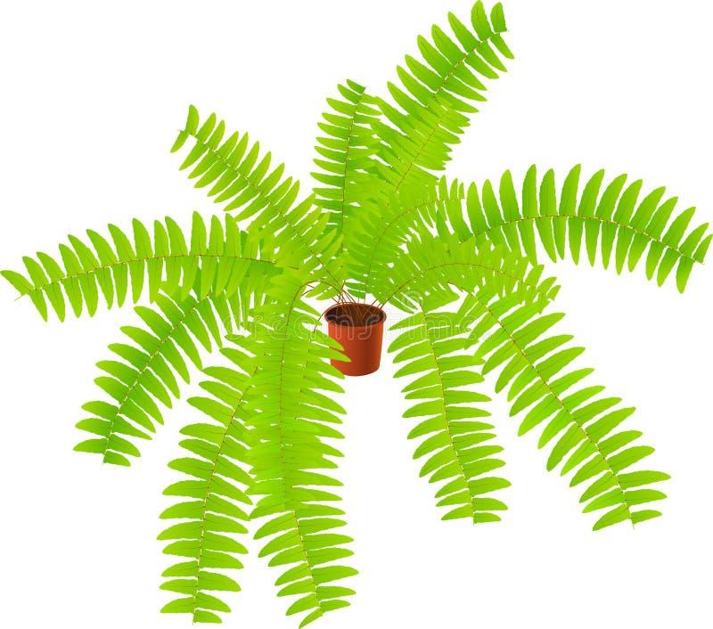 roślina domowa roślina ilustracji