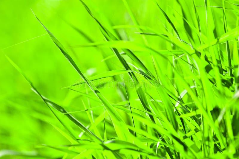 roślina dzika zdjęcia royalty free