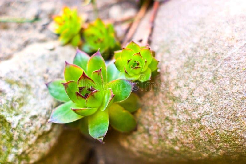 roślina dzika zdjęcia stock