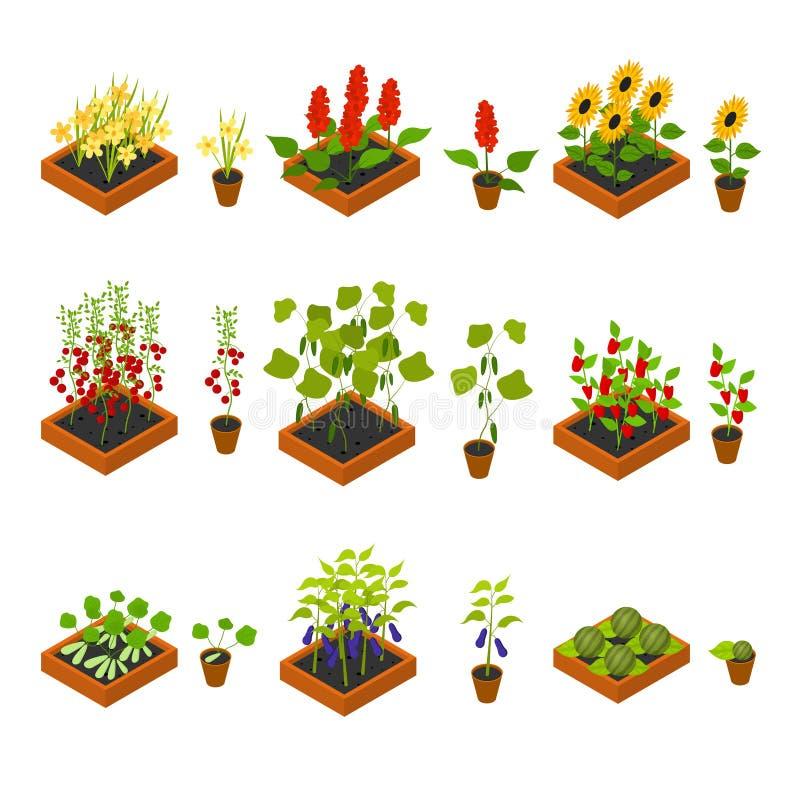Roślina elementy i rozsada Ustawiamy Isometric widok wektor ilustracja wektor