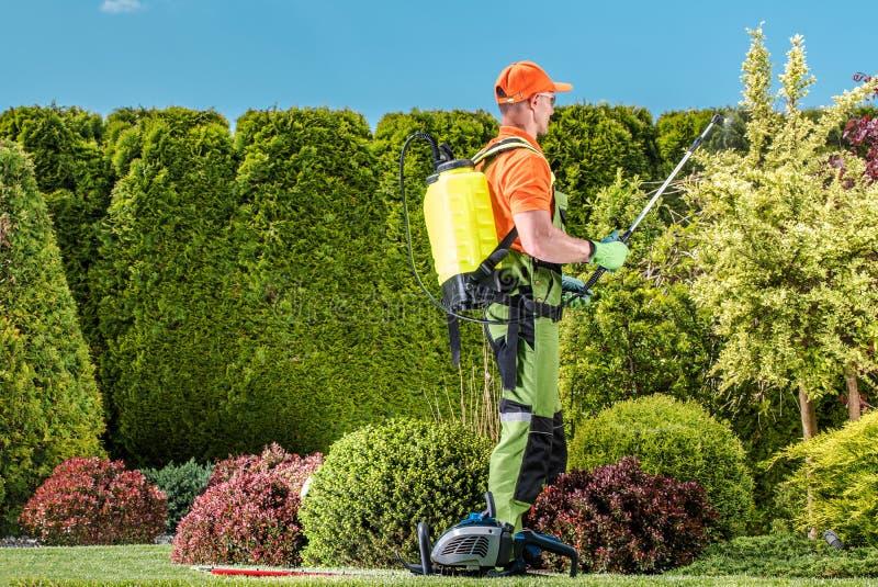 Roślina flitu praca obraz royalty free