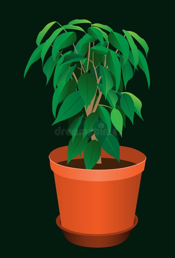 roślina garnek ilustracja wektor