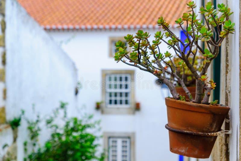 Roślina garnek i typowi domy w Obidos zdjęcia royalty free