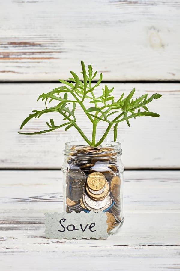 Roślina i pieniądze na drewnie fotografia stock