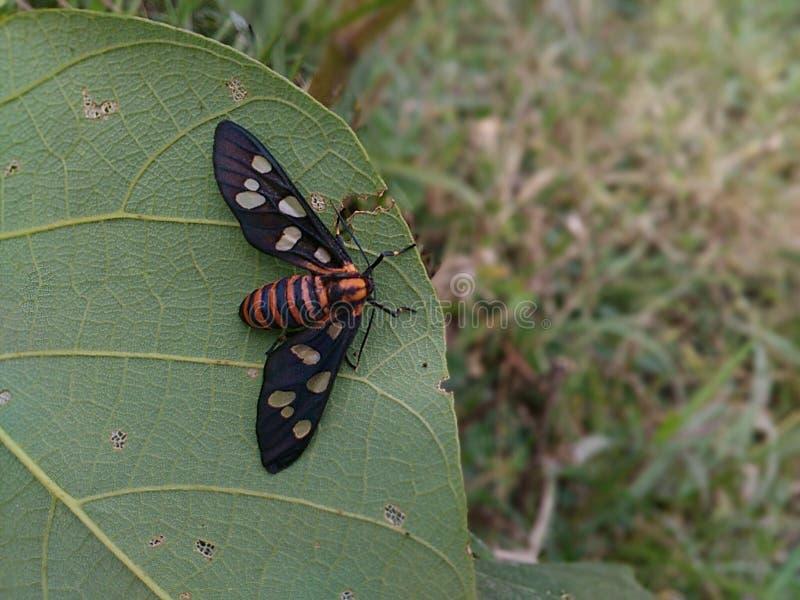 roślina insekt obrazy royalty free