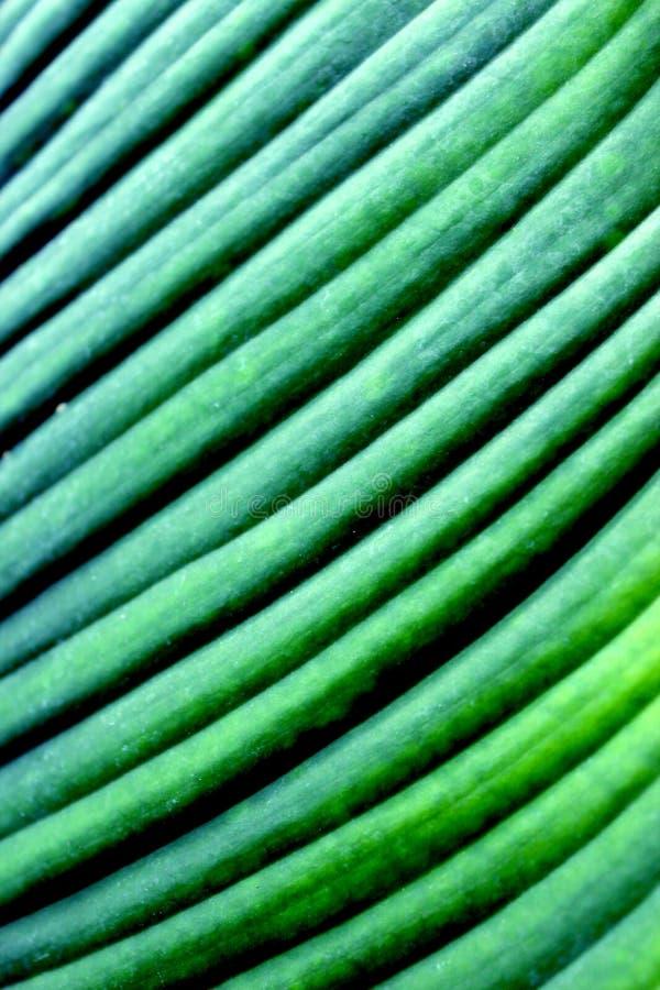 Roślina liść zdjęcia stock