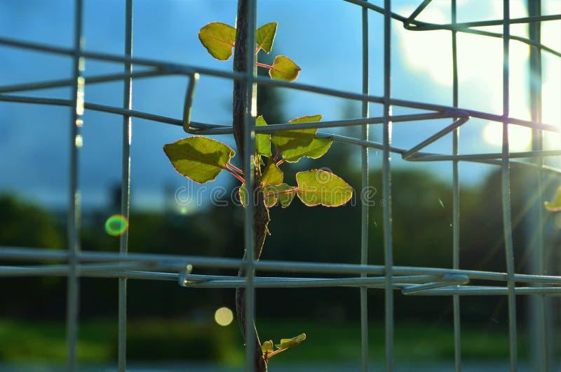 Roślina na drutach fotografia stock