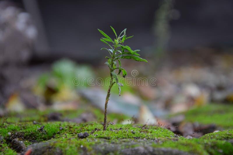 Roślina na kamieniach zakrywających z mech fotografia stock