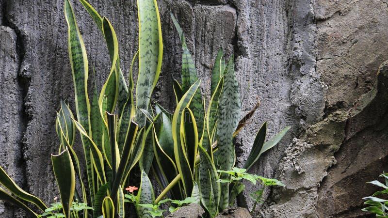 Roślina na kamieniu zdjęcia royalty free