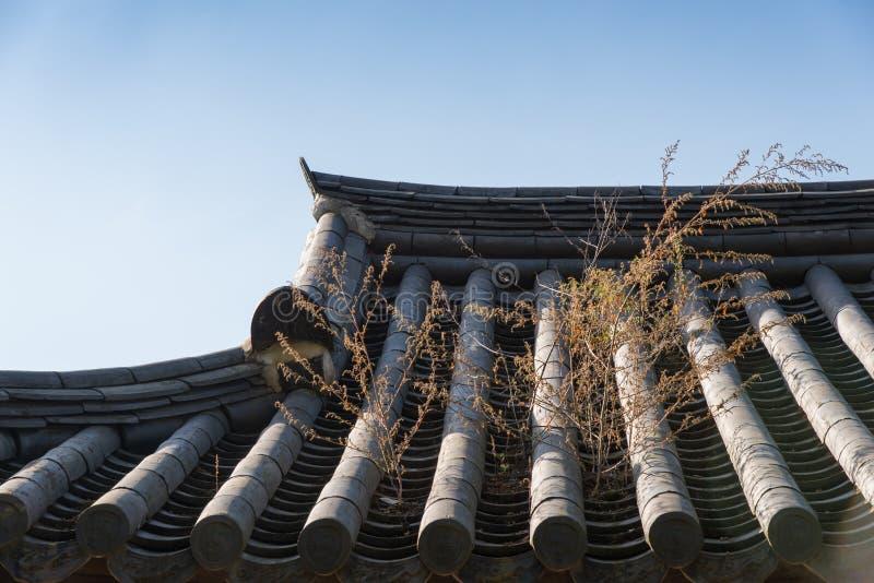 Roślina na koreańczyk taflującym dachu zdjęcia royalty free