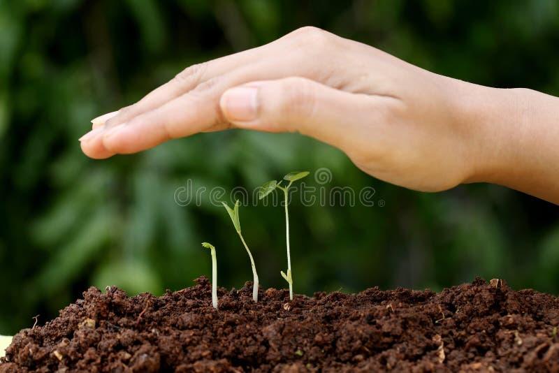 Roślina nowi początki obraz royalty free