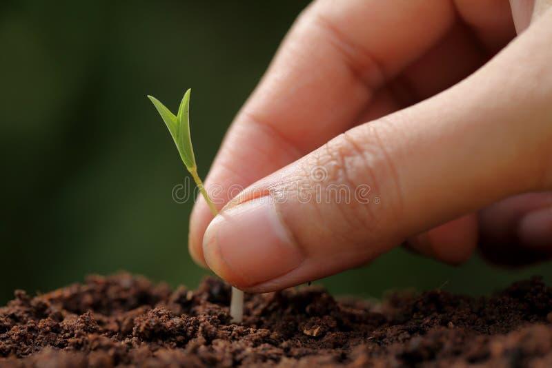 Roślina nowi początki zdjęcia stock