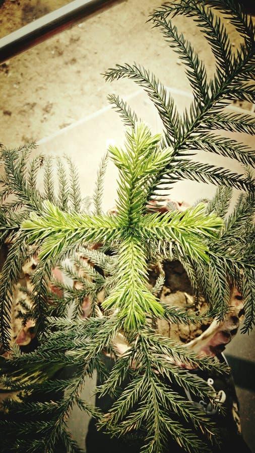 Roślina odgórny widok fotografia stock