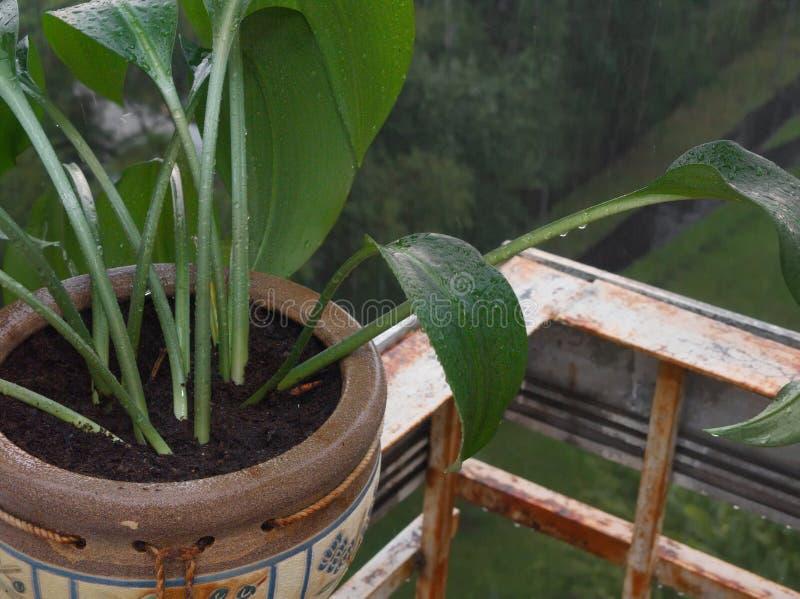 Roślina Pod deszczem obrazy stock
