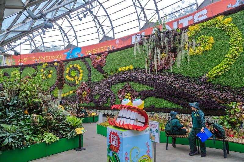 Roślina pokazy wśrodku «Calyx wydarzenia miejsce wydarzenia, Królewski ogród botaniczny, Sydney obrazy stock