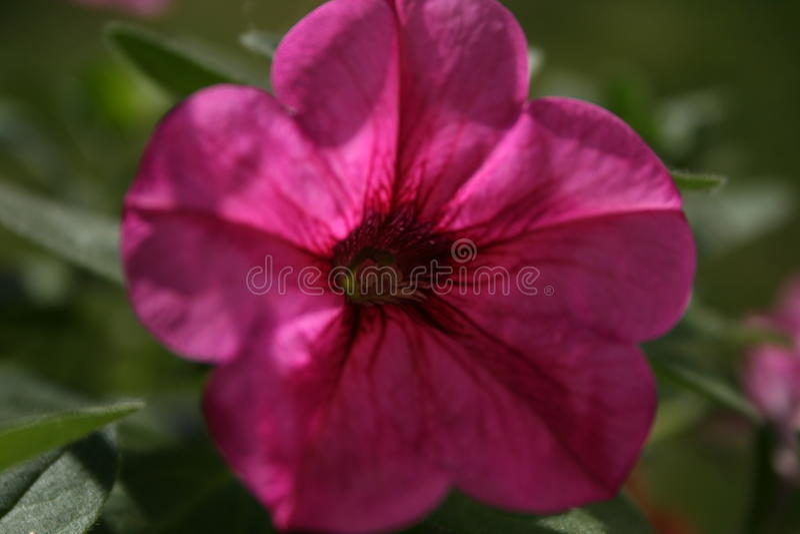Roślina przy czasem zdjęcie stock