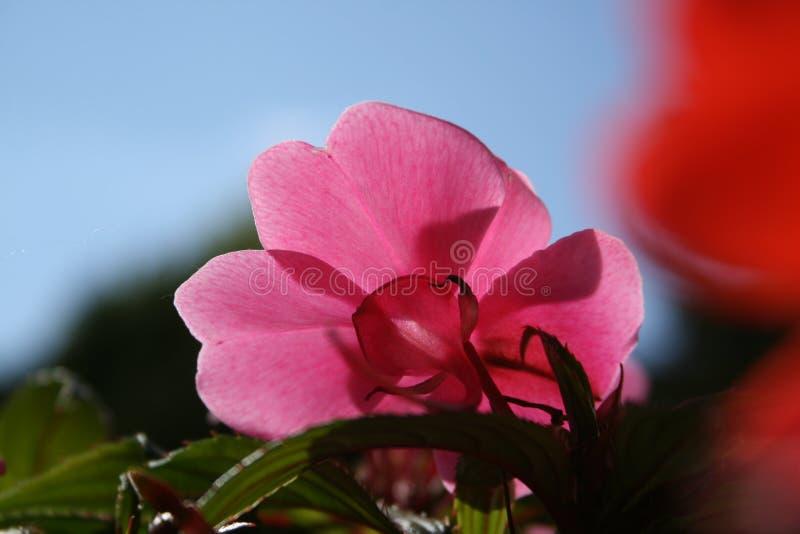 Roślina przy czasem obrazy royalty free