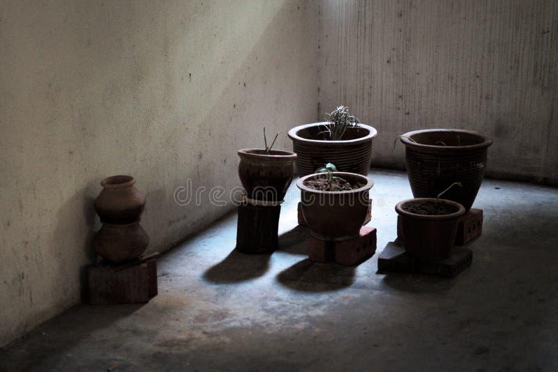 Roślina puszkuje na cegłach w cieniach w pobrudzonej powikłanej sali obrazy royalty free