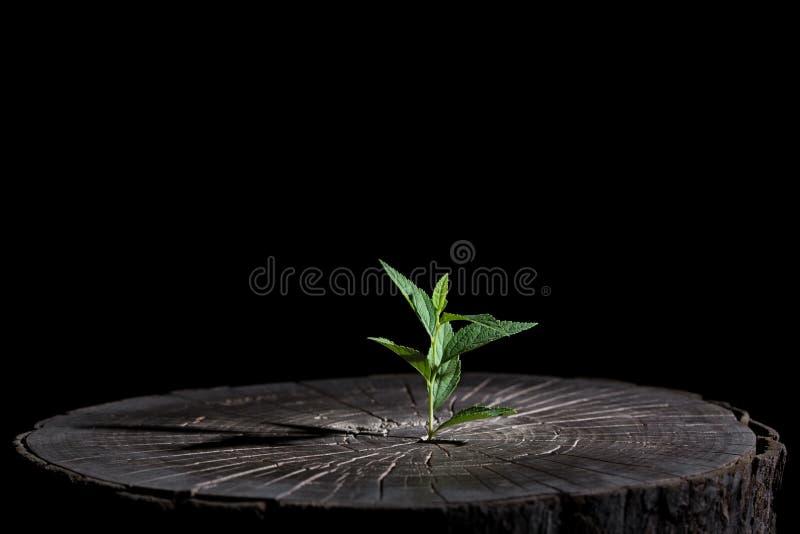 roślina r w drewnie obrazy stock