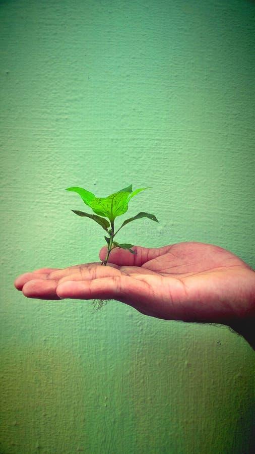 Roślina trzymająca ręką obrazy stock
