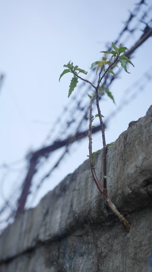 Roślina w betonowej ścianie fotografia royalty free