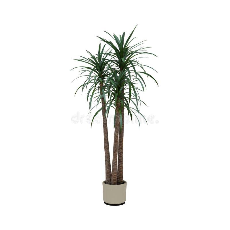 Roślina w garnka bielu tle obraz stock