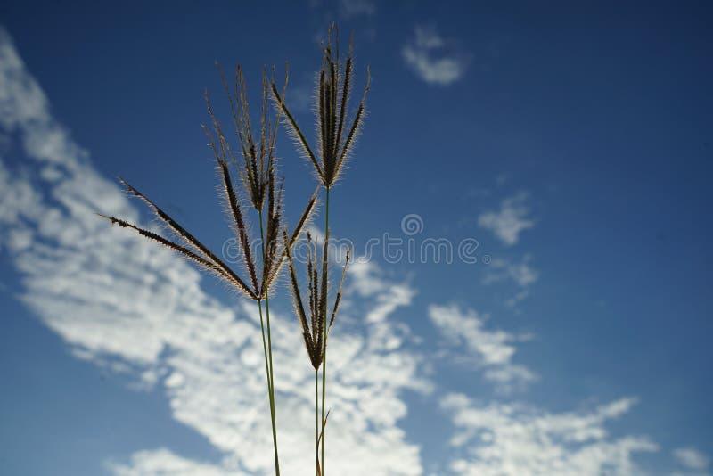 Roślina w niebie zdjęcie stock