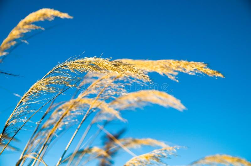 Roślina w niebieskim niebie obraz royalty free