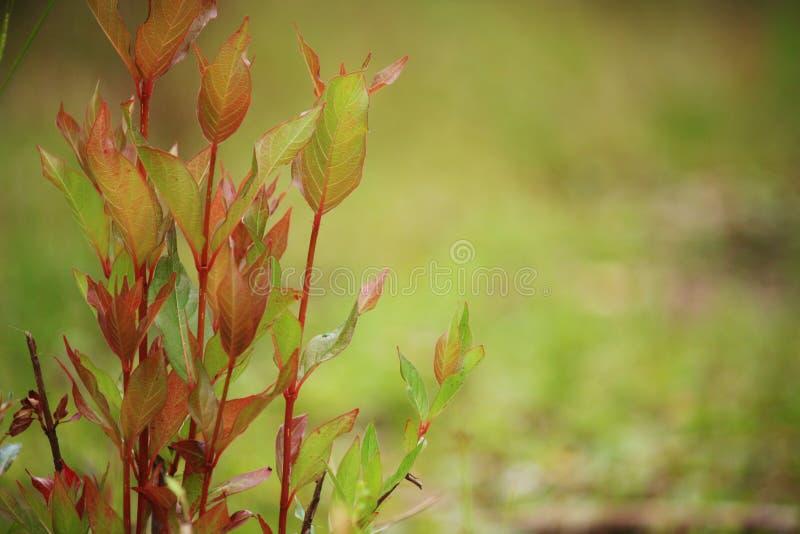 Roślina w ostrości zdjęcia stock