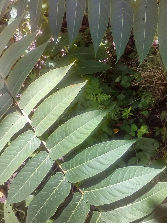 Roślina w słońcu obrazy royalty free