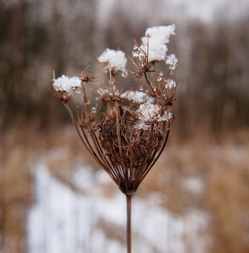 Roślina w zimie obraz stock