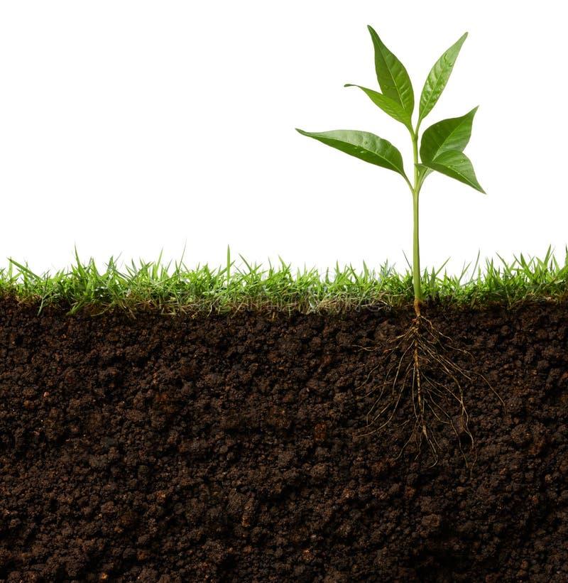 Roślina z korzeniami zdjęcia royalty free