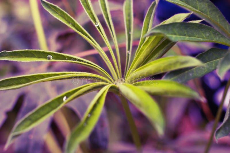 Roślina z wodnymi kroplami obrazy stock