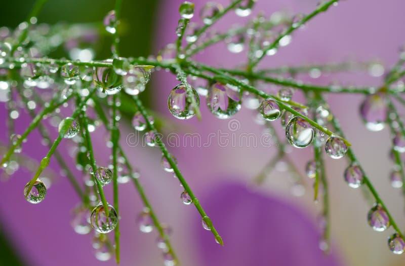 Roślina z wodnymi kroplami zdjęcie stock