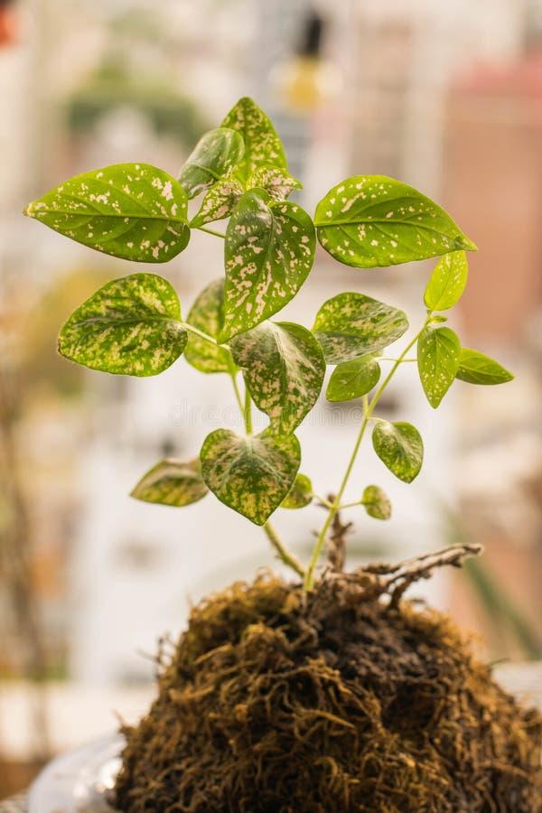 Roślina z zielonymi liśćmi obrazy royalty free