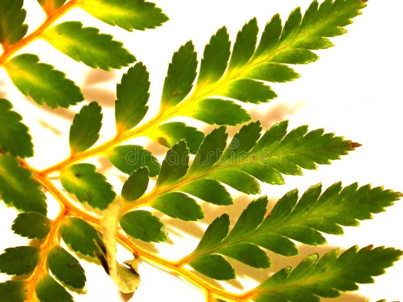 roślinność zdjęcie stock