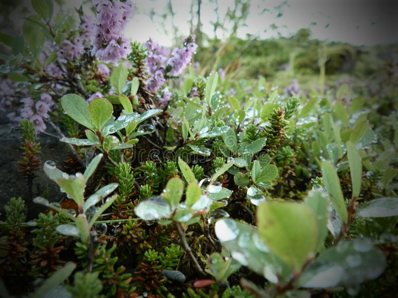 roślinność obraz royalty free